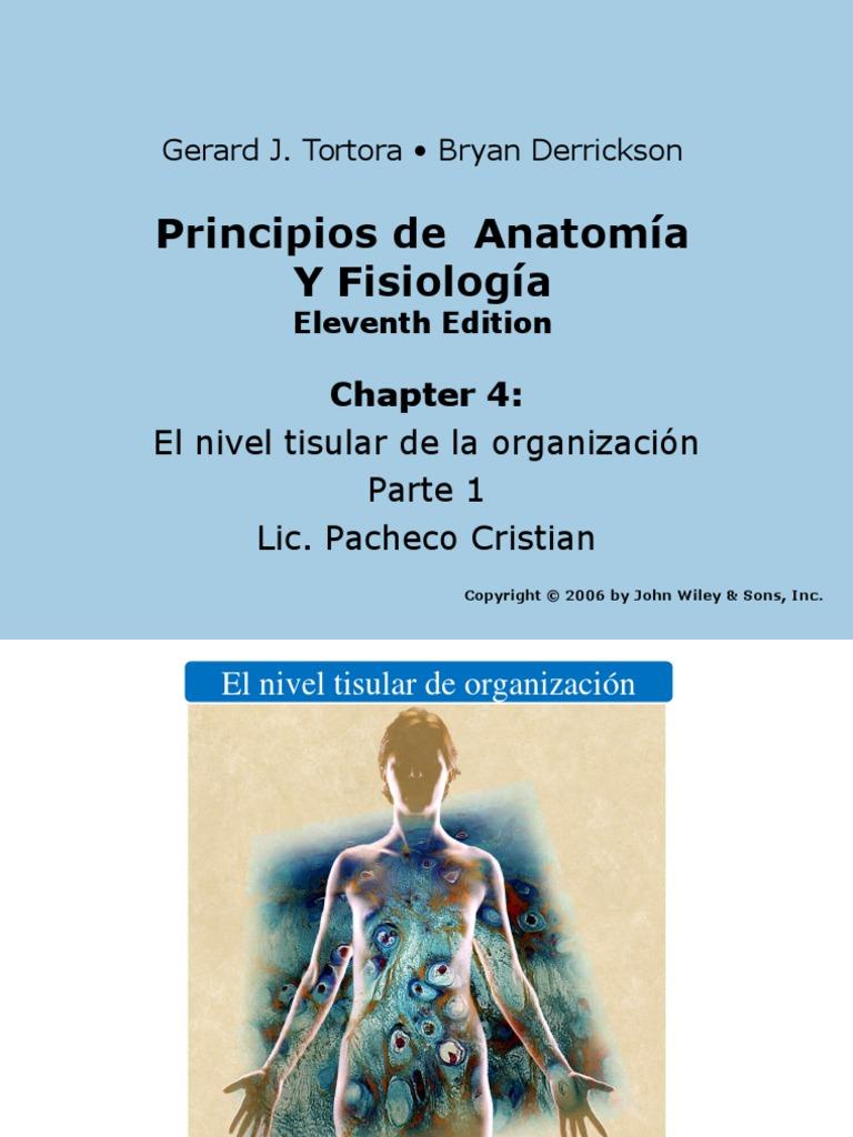 Lujo Principios De La Anatomía Y La Fisiología De Tortora ...
