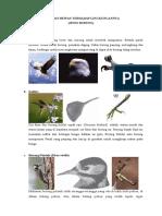 Adaptasi Hewan Burung