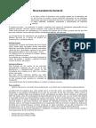 Neuroanato Basica