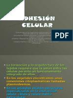 Adhesion Celular 1