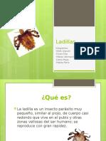 Ladillas (1)