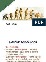 4 Patrones de Evolucion