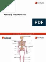 Sistema Osteo Muscular
