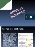 Impulso Nervioso Potenciales de Accion