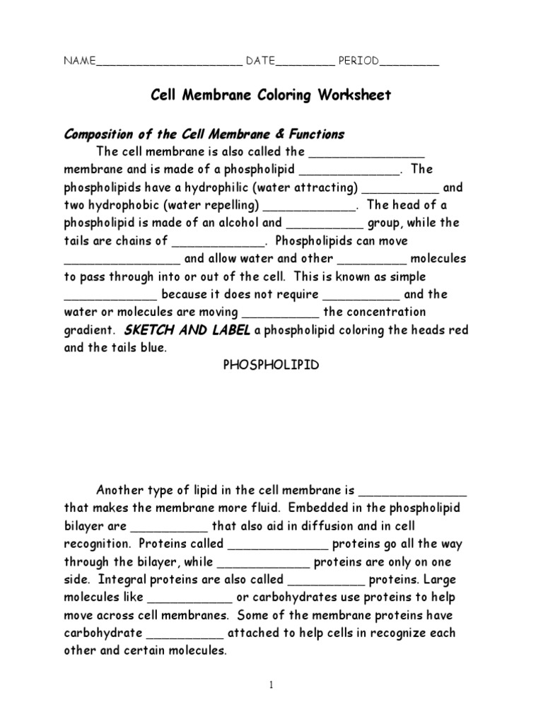 Cell Membrane Coloring Worksheet Phospholipid – Cell Membrane Coloring Worksheet