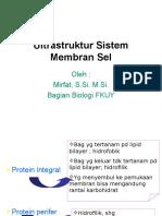 Ultrastruktur Membran Sel