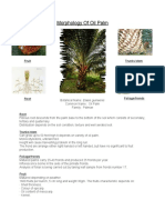 Morphology of Oil Palm