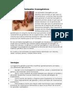 Animales Transgenicos Biologia