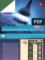Sistema Nervioso-Anatomia Maso