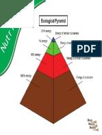 1c_NUTRITION_Ecological Pyramid.pdf