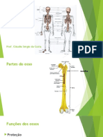 Video Aulas Osteologia