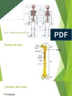 Video Aulas Osteologia