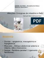 Afecções cirugicas do intestino e reto. pptx.pptx