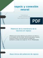 Sinapsis y Conexión Neural