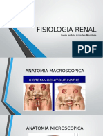 Fisiologia Renal revision