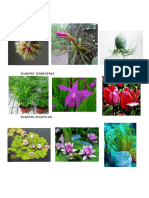PLANTAS AEREAS, TERRESTRES Y ACUATICAS.doc
