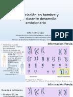 Diferenciación en Hombre y Mujer Durante Desarrollo Embrionario
