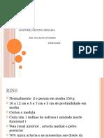 Anatomia Genito-Urinaria