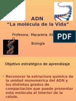 PPT ADN