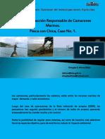 Pesca Comercial Del Camaron