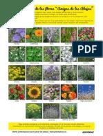 GP_lista-flores-amigas-de-las-abejas.pdf