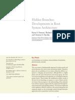 Desarrollo en La Arquitectura de Las Raices (1)