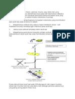 Patofisiologi SGB