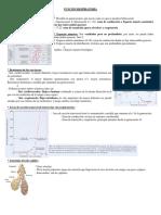 Resumen respiratorio (fisiologia)