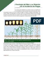 55. La Fenologia Del Maiz y Su Relacion Con La Incidencia de Plagas