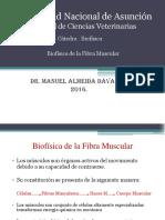 Fibra Muscular Biofisica