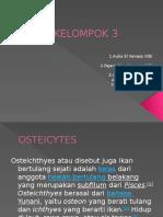 biologi osteicytes