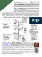 Guía 10. Modelizo La Nutrición de Las Plantas Con Una Especie Del Humedal.