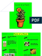 life cycle plants revised