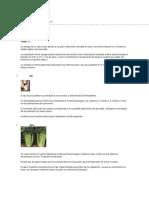 Tipos de Verduras y Hortalizas