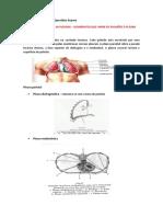 Resumos Anatomia