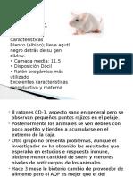 Casos Ratas