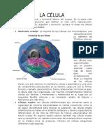 ANATOMÍA Y FISIOLOGÍA DE LA PIEL Y LOS ANEXOS CUTÁNEOS (4).docx