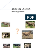 PRODUCCION LACTEA.pptx