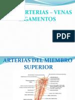 arterias_venas_ligamentos