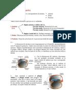 Clase 19 Desarrollo Embrionario Del Aparato Digestivo