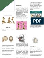 Huesos Palatinos y Parietales