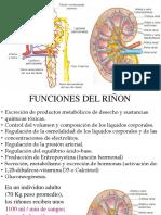 Fisiologia Renal - SF.pdf