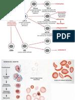 1 Fisiología de la Sangre.ppt