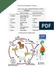 Cestodes en Caninos y Felinos1