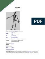 Esqueleto Humano...123