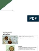 Atlas de Microbiologia. Hongos (1)