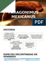 Paragonimus mexicanus