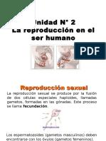 07 El Sistema Reproductor Masculino