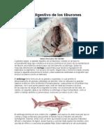 El aparato digestivo de los tiburones.docx