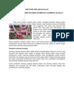 Teknik Sambung Samping Tanaman Kakao